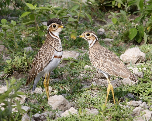 10 Days Birding Safari Tanzania