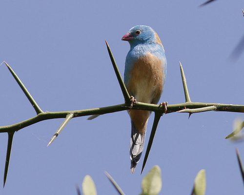 birding in africa