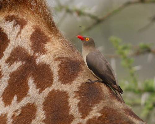 15 Days Kenya Birding & Wildlife Tour
