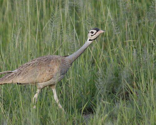 9 Days Tanzania Birds & Beasts