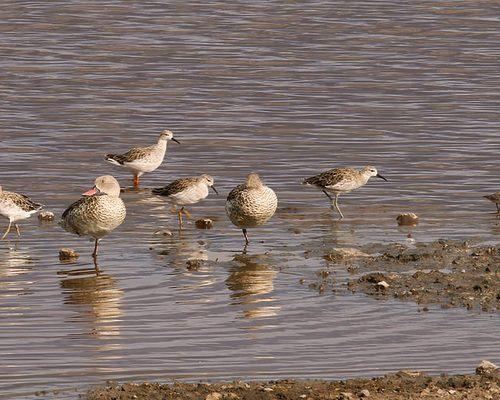 coastal-birds