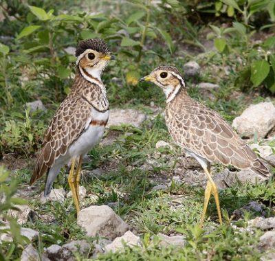 10 Days Birding Safari Tanzania