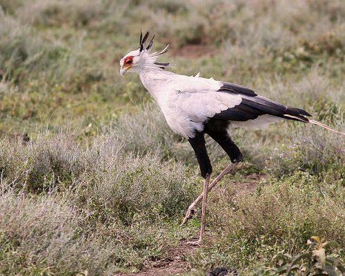 birding-africa-5