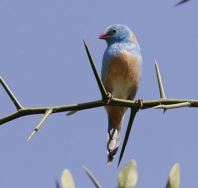 8 Days Birding in Tanzania