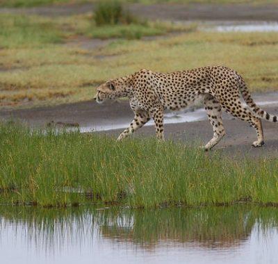 16 Days Birding & Wildlife Tour Tanzania, Pemba