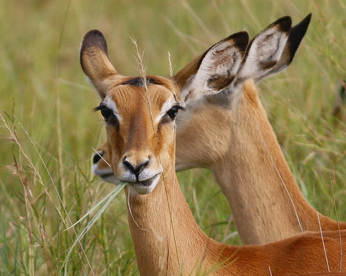 16 Days Kenya & Tanzania Birding Itinerary