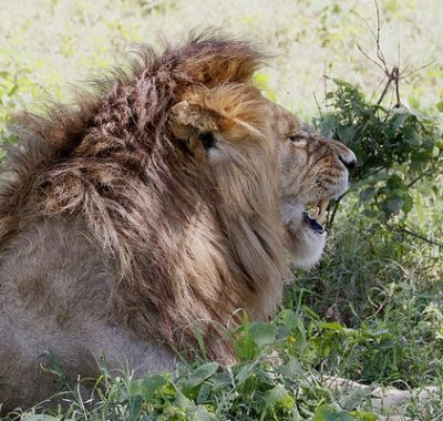 16 Days Off Track Tanzania Deluxe Birding & Game
