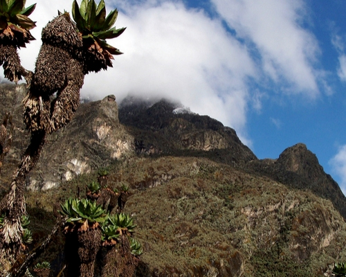 7 Days Rwenzori Mountain Climbing
