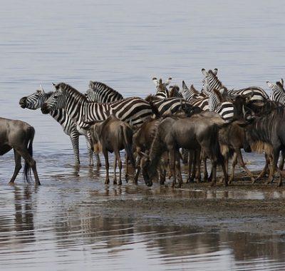 10 Days Big Game & Birding Safari Tanzania