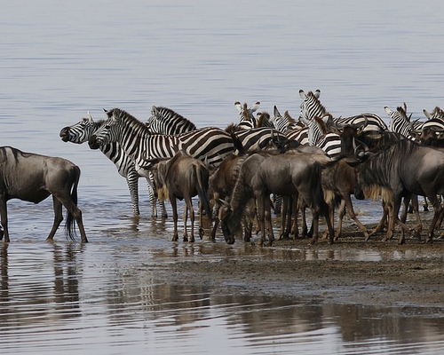 10 Days Big Game & Birding Safari Tanzania