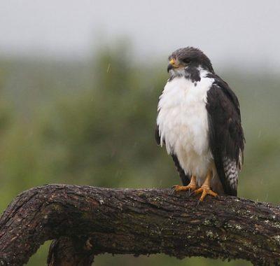 May June Birding Tour 2021/2022