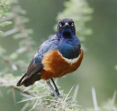 June July Birding Tour Tanzania 2021/2022