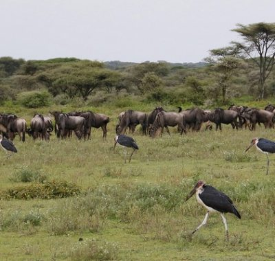 9 Days Tanzania Wildlife and Nature Tour