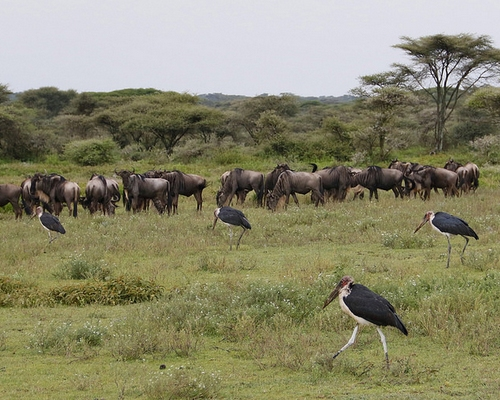 Tanzania Wildlife & Nature Tour