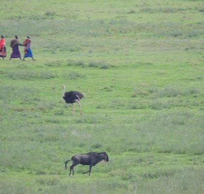 15 Days Birding and Wildlife Safari Kenya