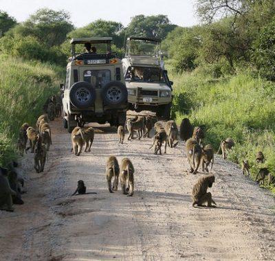 14 Days Birding and Big Game Tanzania