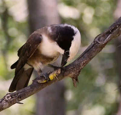 16 Days Birding Tours and Wildlife Uganda