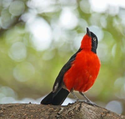 21 Days Lake Victoria to the East Coast Tanzania Birding