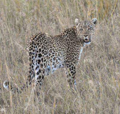 12 Days Northern Tanzania Birding, Photography & Big Game Safari