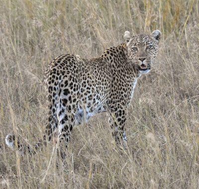 12 Days Northern Tanzania Birding, Photography & Big Game Safari