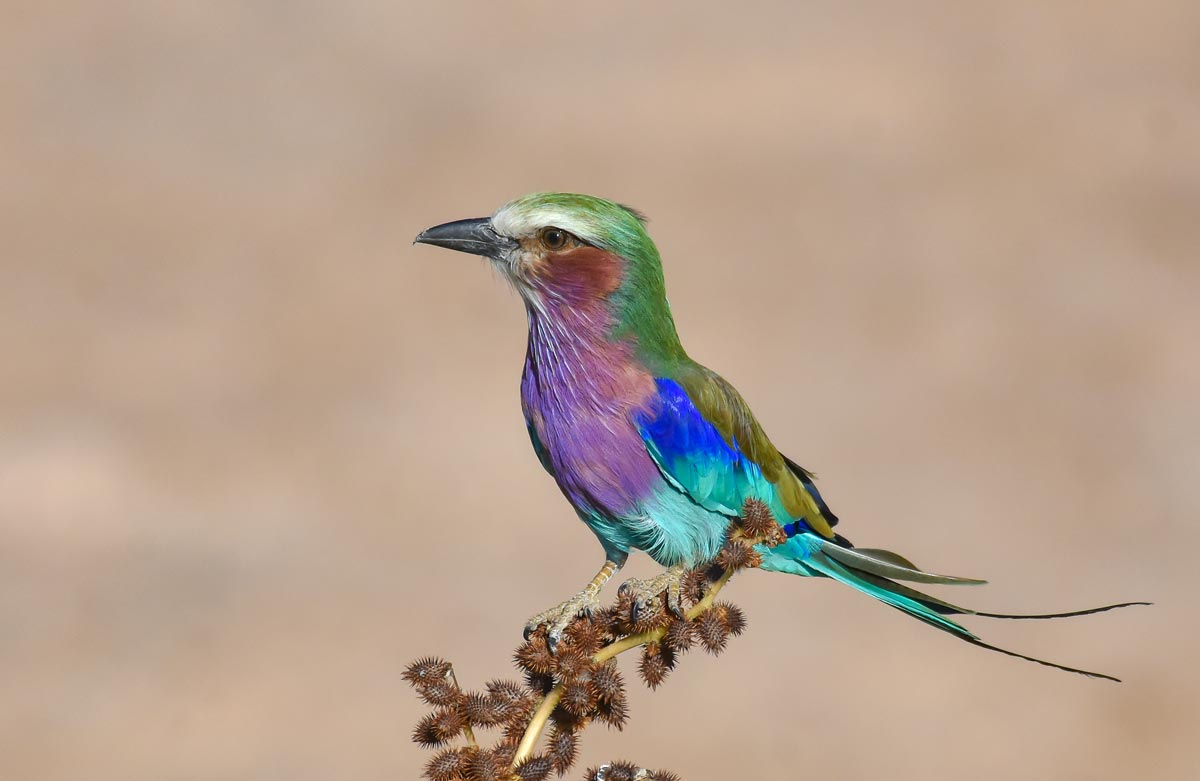 14 Days Tanzania Birding in Luxury