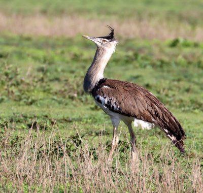 12 East Coast Birding Tour Tanzania & Kenya