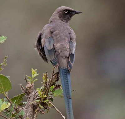 7 Days Northern Tanzania – Tanzania Birding Express