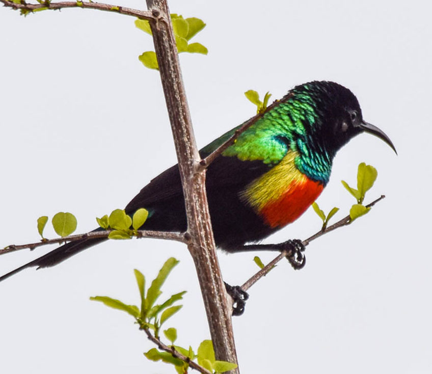 21 Days Lake Victoria to the East Coast Tanzania Birding