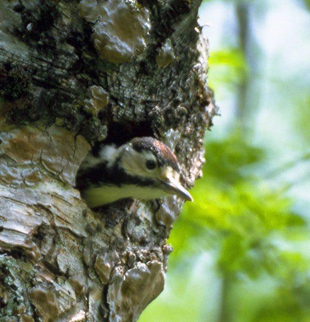 bird nest cavity 2