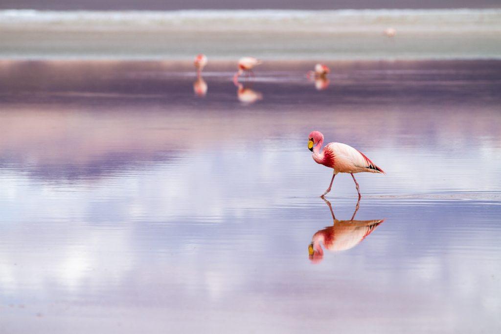 flamingo endemic