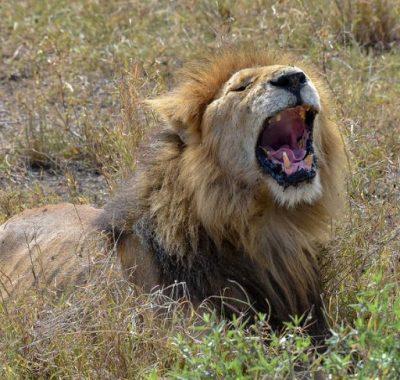 16 Days Kenya, Tanzania Birding & Wildlife