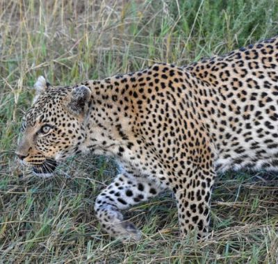 15 Days Kenya Birding & Wildlife Tour
