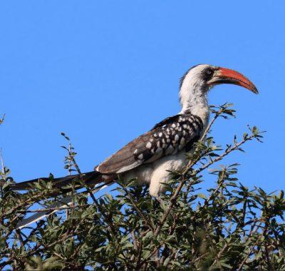 31 Days Grand Tanzania Birding – The Anniversary Route – Birding, Photography & Big Game