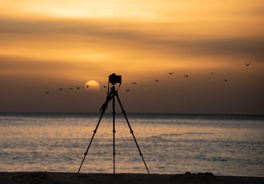 Birding photography