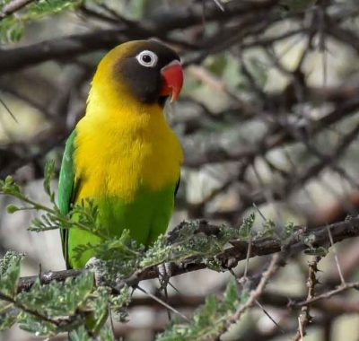 14 Days Northern Tanzania Birding & Big Game Photographic Safari